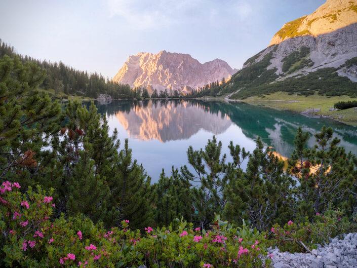 Blütenpracht am Alpensee