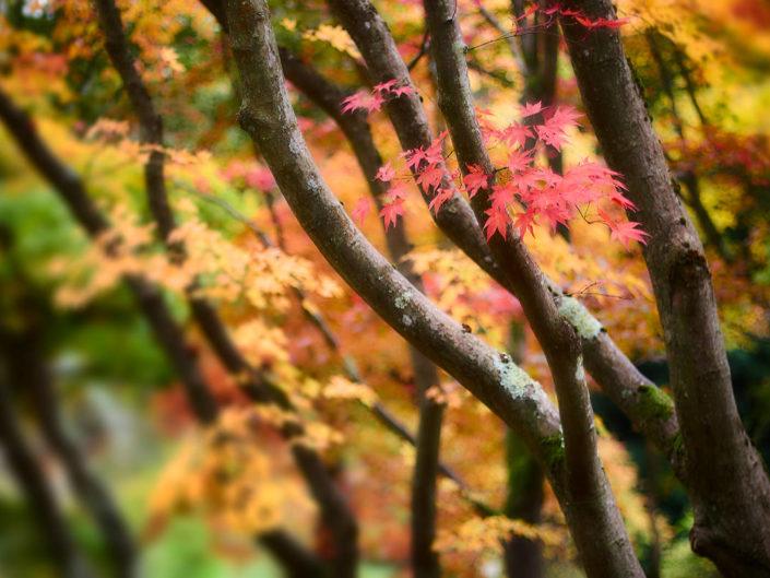 Farbenspiel des Herbsts