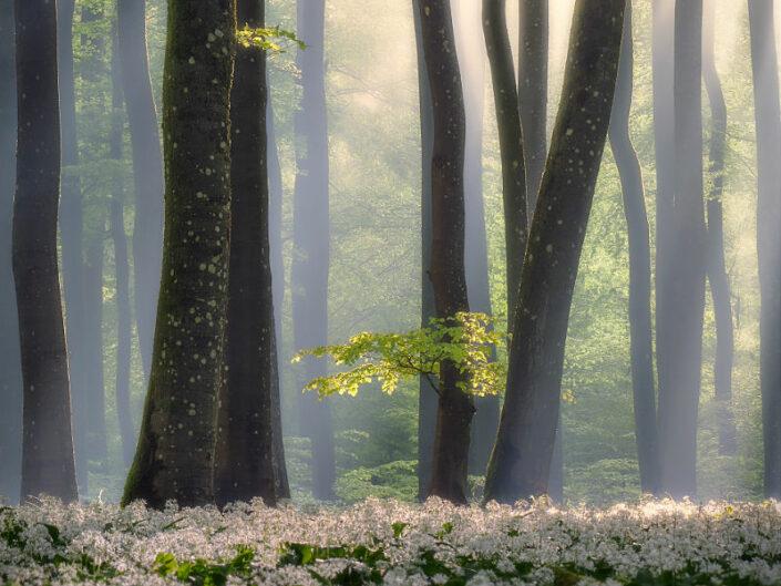 Mythischer Eifelwald