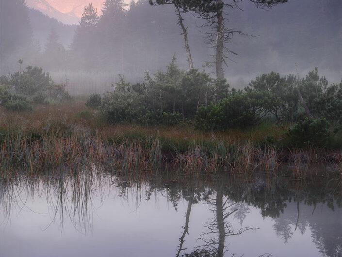 Nebelmoor