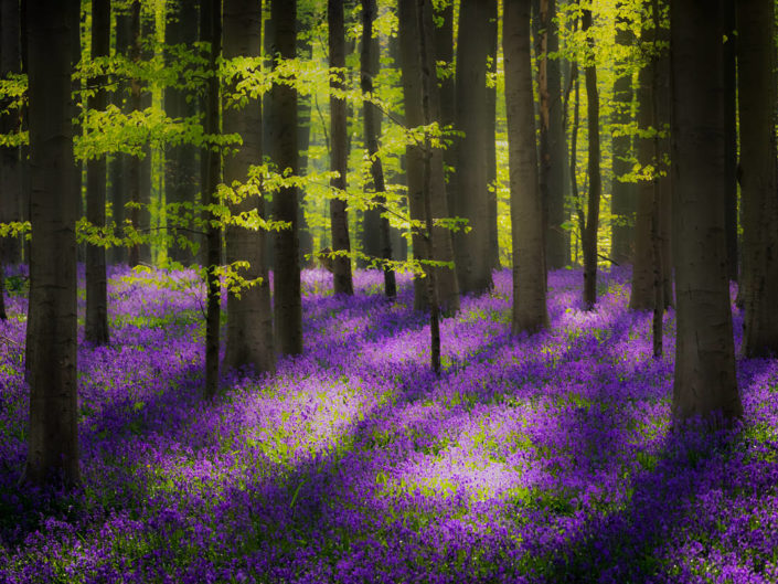 Licht im Zauberwald